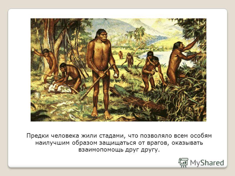 Предки человека жили стадами, что позволяло всем особям наилучшим образом защищаться от врагов, оказывать взаимопомощь друг другу.