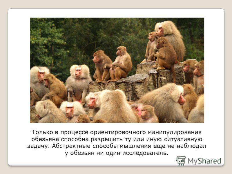 Только в процессе ориентировочного манипулирования обезьяна способна разрешить ту или иную ситуативную задачу. Абстрактные способы мышления еще не наблюдал у обезьян ни один исследователь.