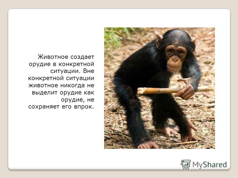 Животное создает орудие в конкретной ситуации. Вне конкретной ситуации животное никогда не выделит орудие как орудие, не сохраняет его впрок.