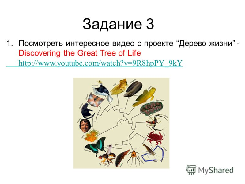 1.Посмотреть интересное видео о проекте Дерево жизни - Discovering the Great Tree of Life http://www.youtube.com/watch?v=9R8hpPY_9kY Задание 3