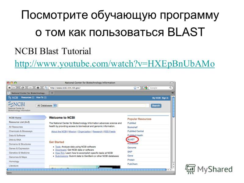 Посмотрите обучающую программу о том как пользоваться BLAST NCBI Blast Tutorial http://www.youtube.com/watch?v=HXEpBnUbAMo