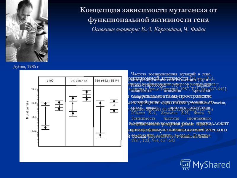 Концепция зависимости мутагенеза от функциональной активности гена Основные соавторы: В.Л. Корогодина, Ч. Файси мутирование генов зависит от их транскрипционной активности [ Ильина В.Л., Корогодин В.И., Файси Ч. Зависимость частоты спонтанного возник