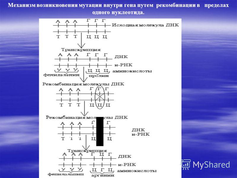 Механизм возникновения мутации внутри гена путем рекомбинации в пределах одного нуклеотида.