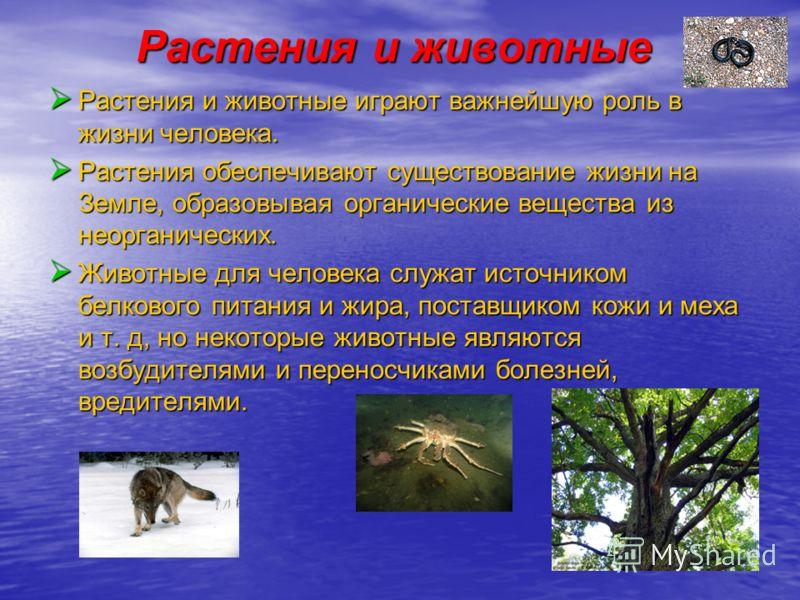 Растения и животные Растения и животные Растения и животные играют важнейшую роль в жизни человека. Растения обеспечивают существование жизни на Земле, образовывая органические вещества из неорганических. Животные для человека служат источником белко