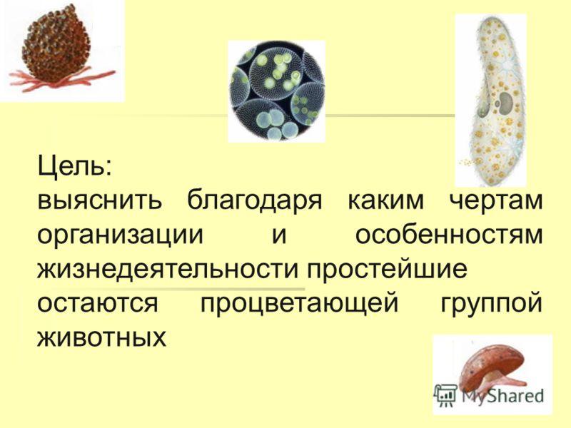 Цель: выяснить благодаря каким чертам организации и особенностям жизнедеятельности простейшие остаются процветающей группой животных