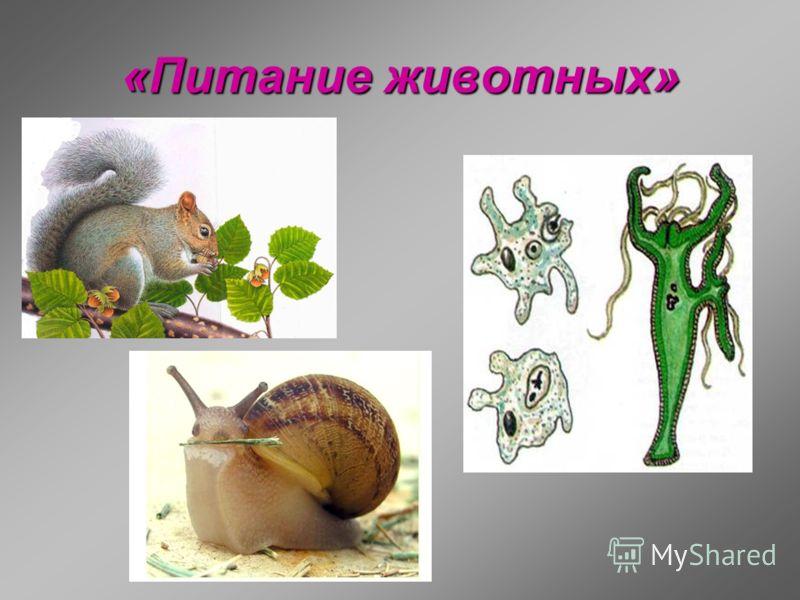 «Питание животных»