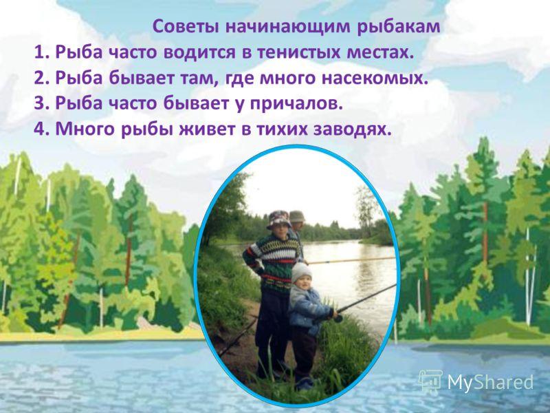 Советы начинающим рыбакам 1. Рыба часто водится в тенистых местах. 2. Рыба бывает там, где много насекомых. 3. Рыба часто бывает у причалов. 4. Много рыбы живет в тихих заводях.