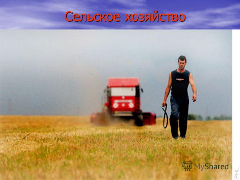 Сельское хозяйство Сельское хозяйство