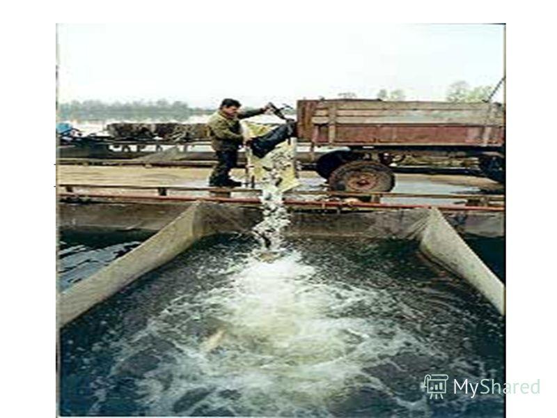 Бисеровское рыбное хозяйство