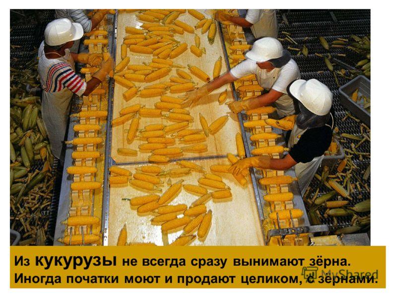 Из кукурузы не всегда сразу вынимают зёрна. Иногда початки моют и продают целиком, с зёрнами.