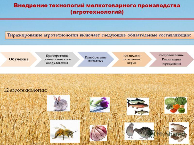 Тиражирование агротехнологии включает следующие обязательные составляющие: 12 агротехнологий: Внедрение технологий мелкотоварного производства (агротехнологий)