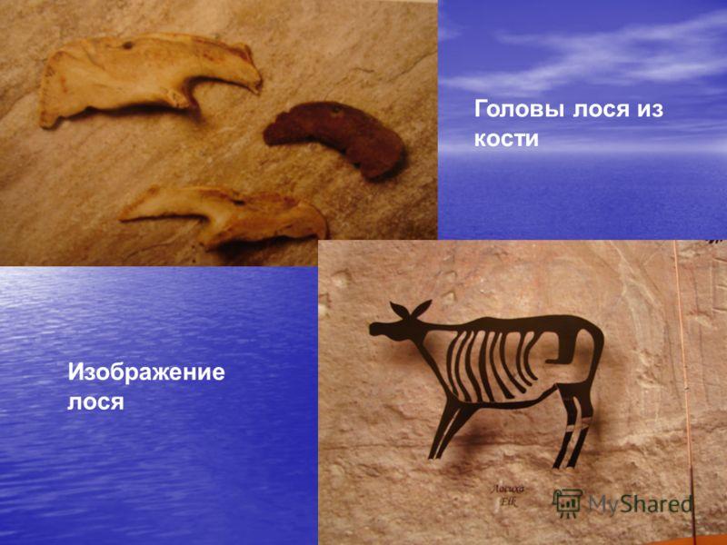 Изображение лося Головы лося из кости