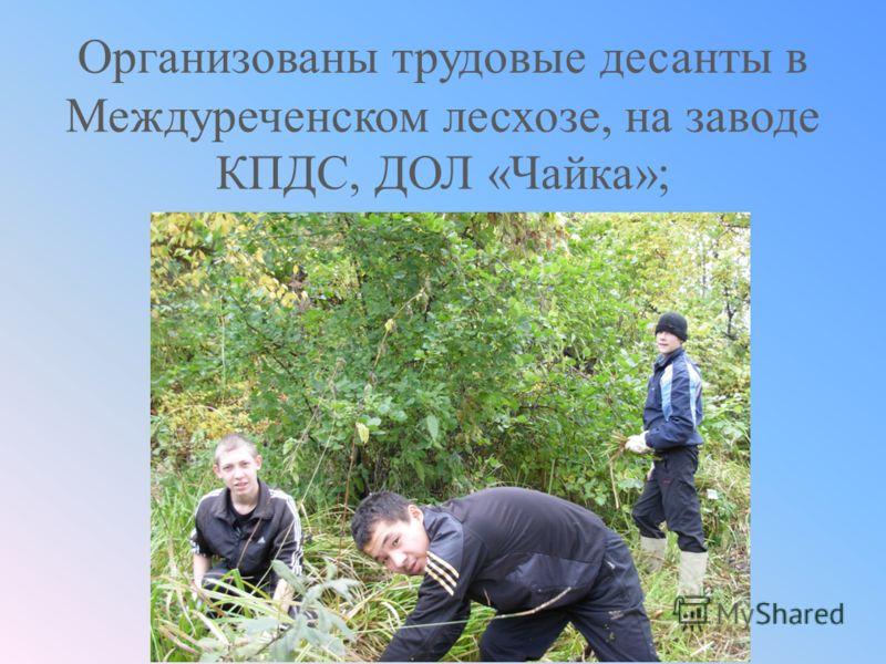 Организованы трудовые десанты в Междуреченском лесхозе, на заводе КПДС, ДОЛ «Чайка»;
