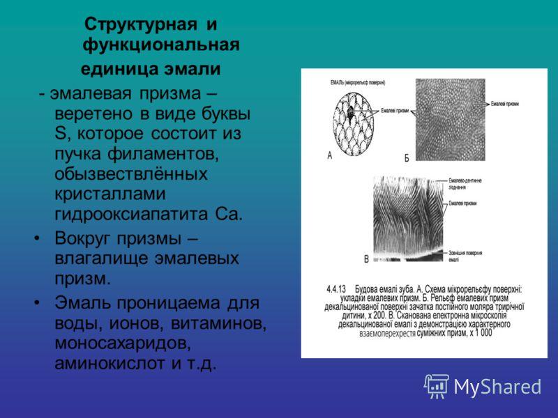 Структурная и функциональная единица эмали - эмалевая призма – веретено в виде буквы S, которое состоит из пучка филаментов, обызвествлённых кристаллами гидрооксиапатита Са. Вокруг призмы – влагалище эмалевых призм. Эмаль проницаема для воды, ионов,