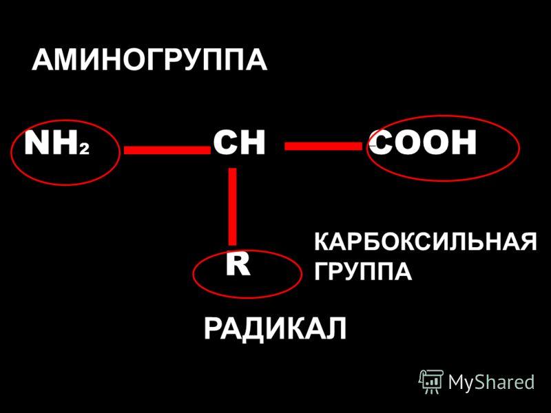 NH 2 CH COOH R АМИНОГРУППА РАДИКАЛ КАРБОКСИЛЬНАЯ ГРУППА