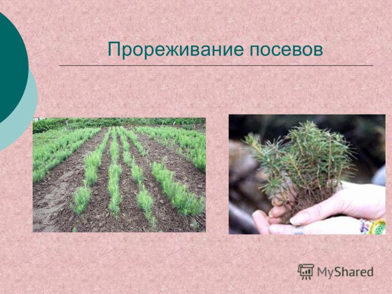 Прореживание посевов