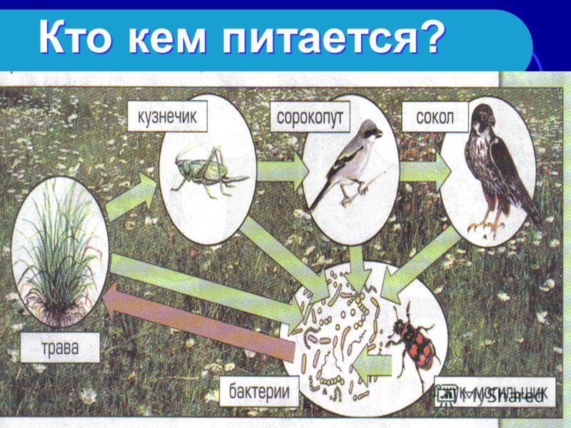 Существует ли взаимодействие между живой и неживой природой?