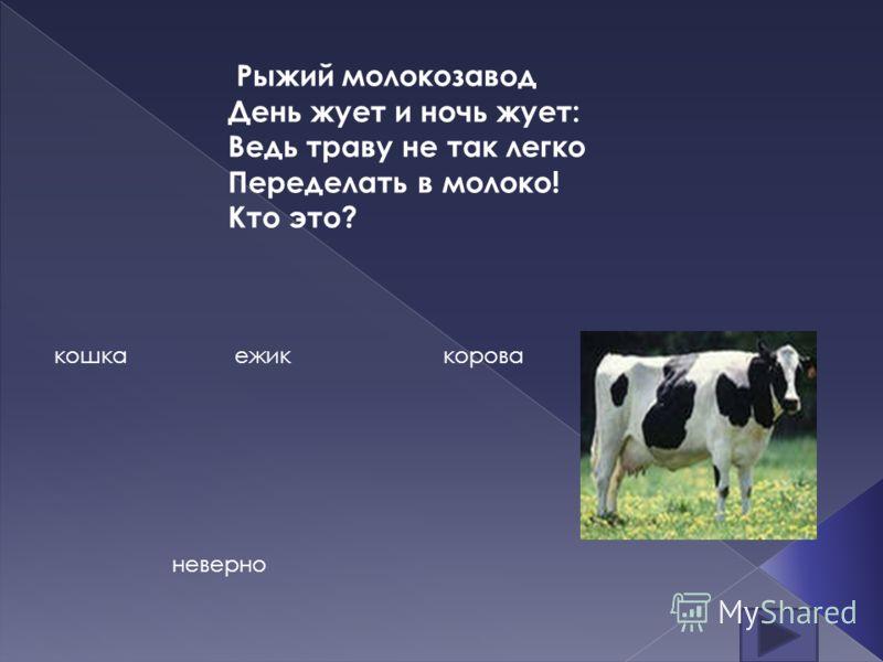 Рыжий молокозавод День жует и ночь жует: Ведь траву не так легко Переделать в молоко! Кто это? кошкаежиккорова неверно