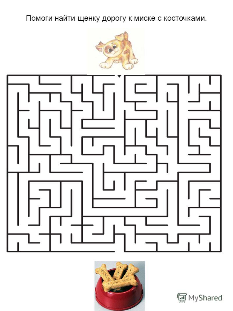 Помоги найти щенку дорогу к миске с косточками.