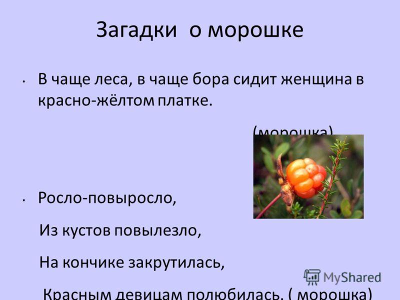 Загадки о морошке В чаще леса, в чаще бора сидит женщина в красно-жёлтом платке. (морошка) Росло-повыросло, Из кустов повылезло, На кончике закрутилась, Красным девицам полюбилась. ( морошка)