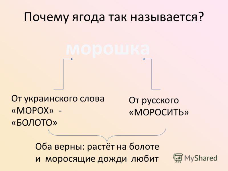 Почему ягода так называется? морошка От украинского слова «МОРОХ» - «БОЛОТО» От русского «МОРОСИТЬ» Оба верны: растёт на болоте и моросящие дожди любит