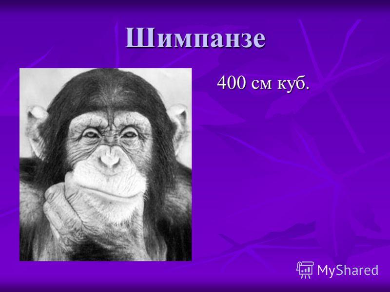 Шимпанзе 400 см куб.