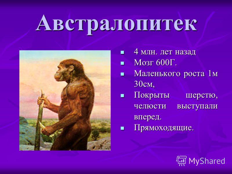 Австралопитек 4 млн. лет назад 4 млн. лет назад Мозг 600Г. Мозг 600Г. Маленького роста 1м 30см, Маленького роста 1м 30см, Покрыты шерстю, челюсти выступали вперед. Покрыты шерстю, челюсти выступали вперед. Прямоходящие. Прямоходящие.