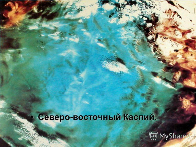Северо-восточный Каспий.Северо-восточный Каспий.