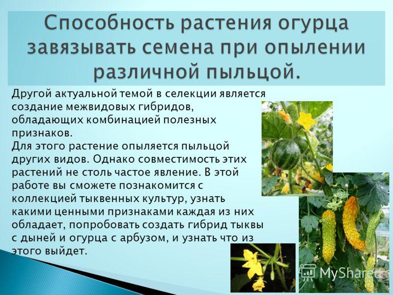 Другой актуальной темой в селекции является создание межвидовых гибридов, обладающих комбинацией полезных признаков. Для этого растение опыляется пыльцой других видов. Однако совместимость этих растений не столь частое явление. В этой работе вы сможе