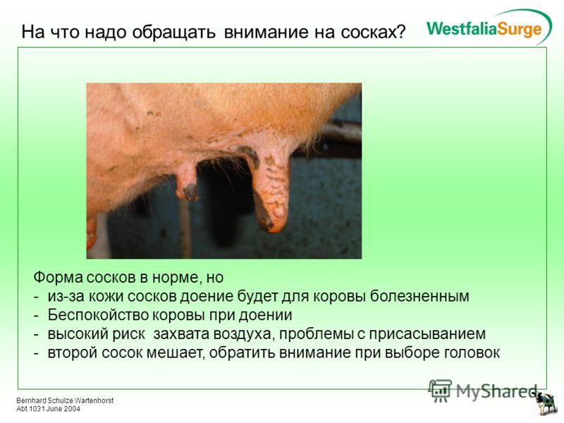 Bernhard Schulze Wartenhorst Abt.1031 June 2004 На что надо обращать внимание на сосках? Форма сосков в норме, но - из-за кожи сосков доение будет для коровы болезненным - Беспокойство коровы при доении - высокий риск захвата воздуха, проблемы с прис