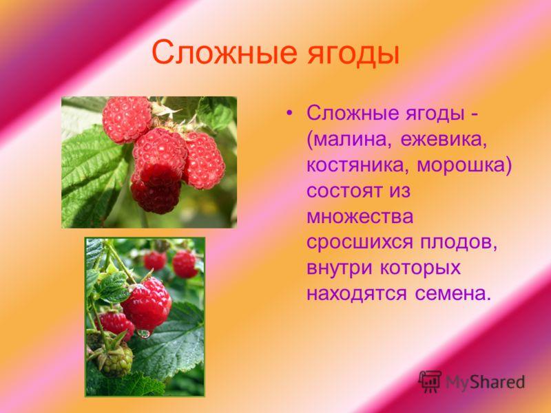 Сложные ягоды Сложные ягоды - (малина, ежевика, костяника, морошка) состоят из множества сросшихся плодов, внутри которых находятся семена.