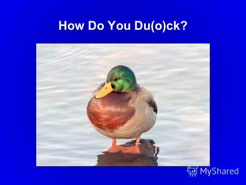 How Do You Du(o)ck?