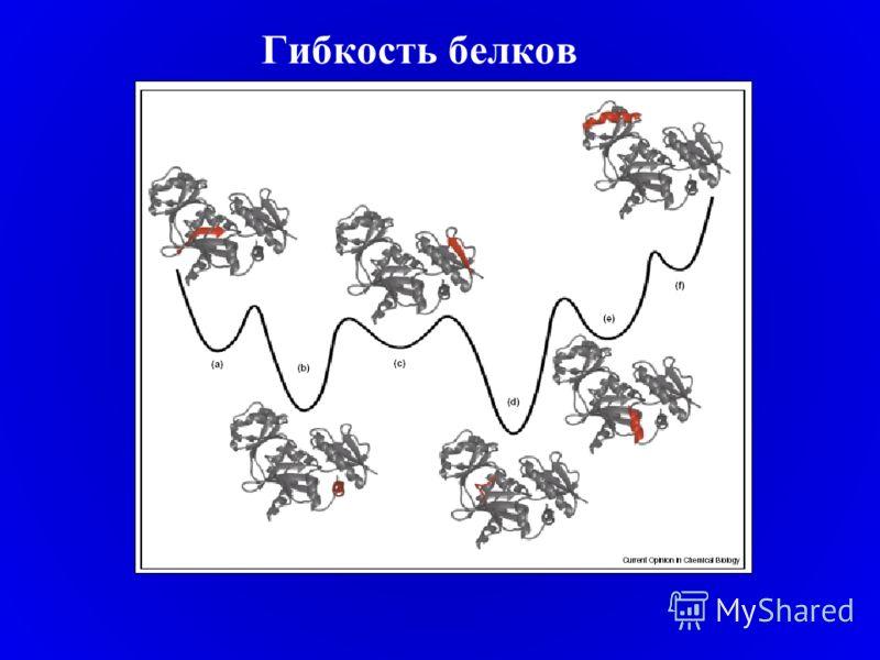Гибкость белков