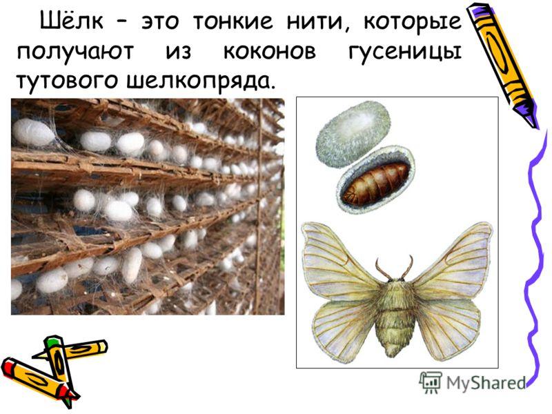 Шёлк – это тонкие нити, которые получают из коконов гусеницы тутового шелкопряда.