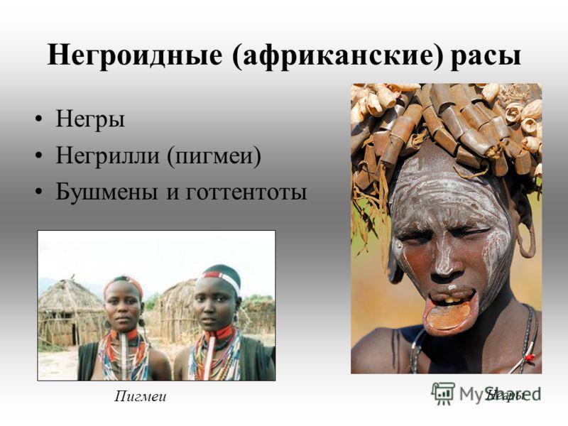 Негроидные (африканские) расы Негры Негрилли (пигмеи) Бушмены и готтентоты Негры Пигмеи