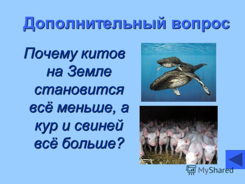 Дополнительный вопрос Почему китов на Земле становится всё меньше, а кур и свиней всё больше?