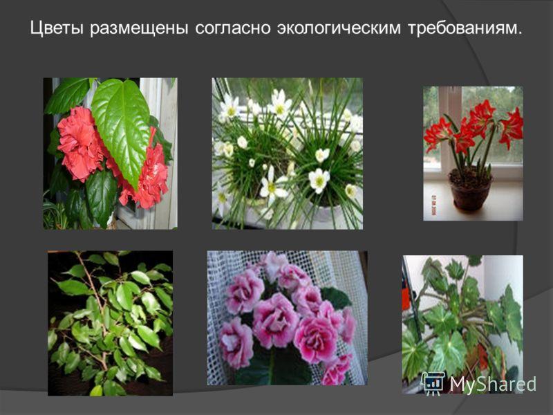 Цветы размещены согласно экологическим требованиям.