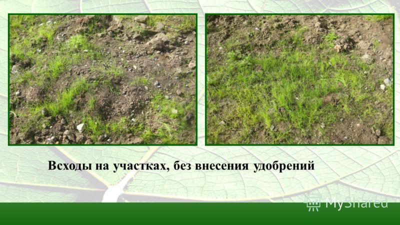 Всходы на участках, без внесения удобрений
