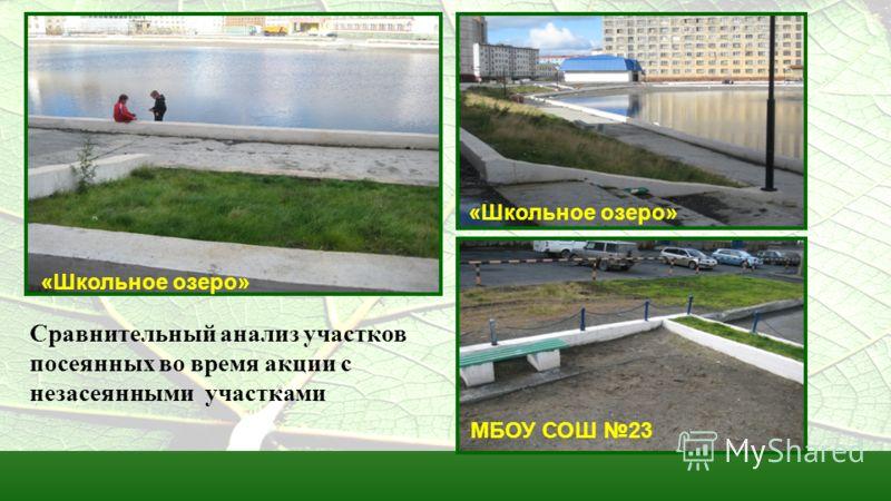 Сравнительный анализ участков посеянных во время акции с незасеянными участками «Школьное озеро» МБОУ СОШ 23