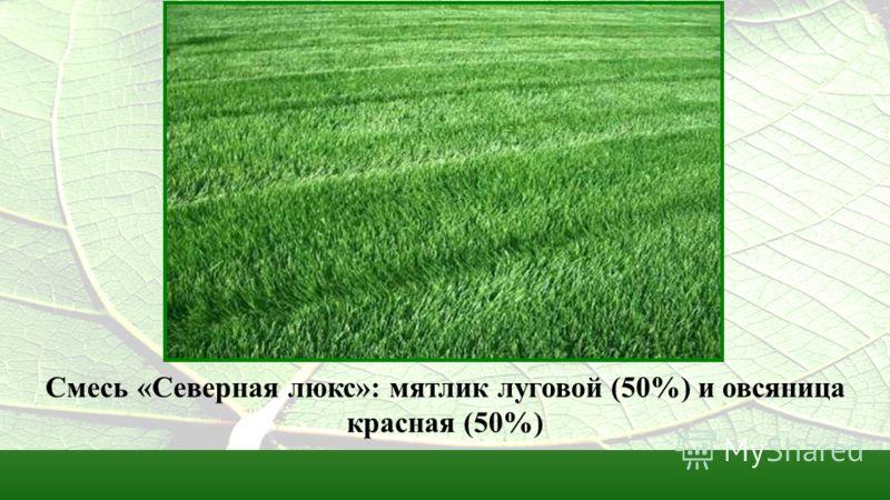 Смесь «Северная люкс»: мятлик луговой (50%) и овсяница красная (50%)