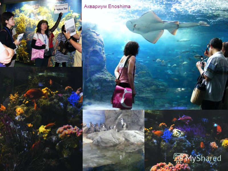 Аквариум Enoshima