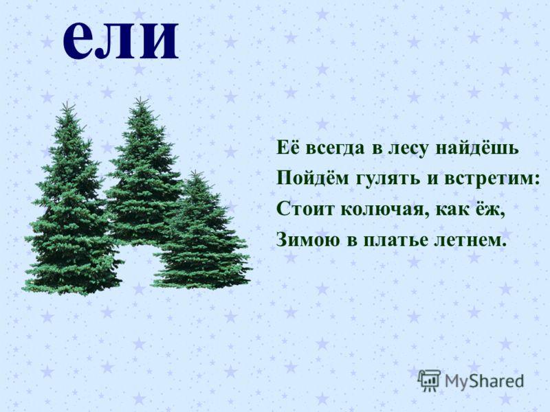 ели Её всегда в лесу найдёшь Пойдём гулять и встретим: Стоит колючая, как ёж, Зимою в платье летнем.
