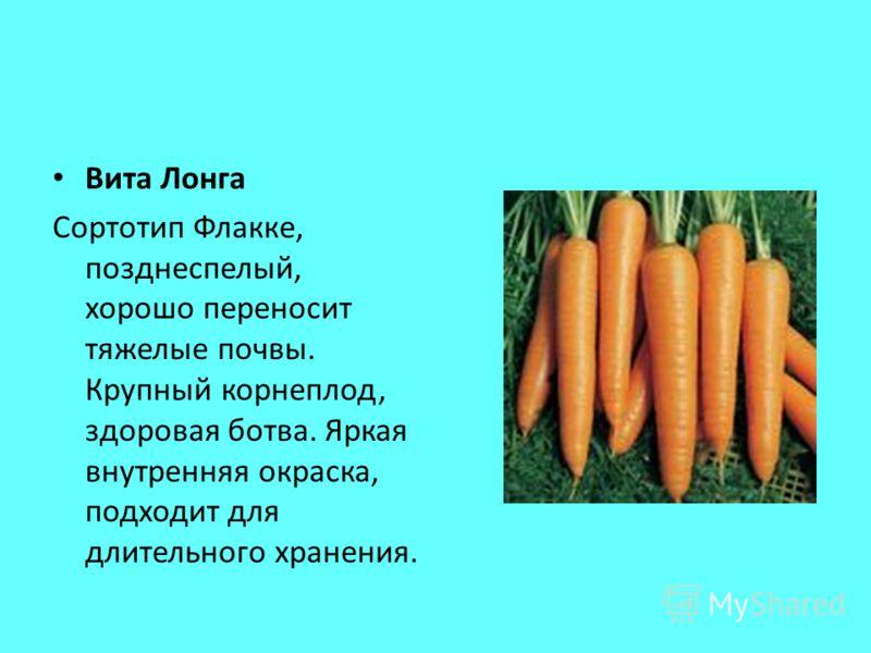Вита Лонга Сортотип Флакке, позднеспелый, хорошо переносит тяжелые почвы. Крупный корнеплод, здоровая ботва. Яркая внутренняя окраска, подходит для длительного хранения.