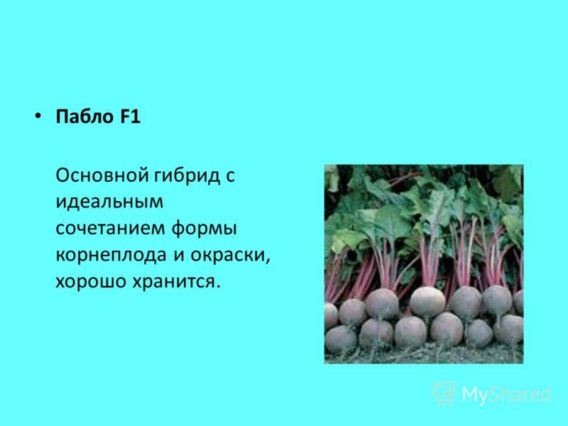 Пабло F1 Основной гибрид с идеальным сочетанием формы корнеплода и окраски, хорошо хранится.