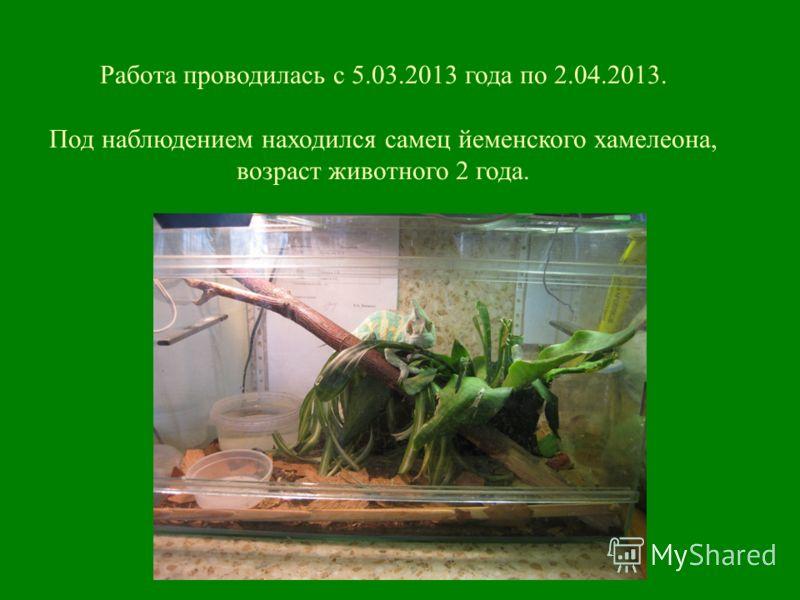Работа проводилась с 5.03.2013 года по 2.04.2013. Под наблюдением находился самец йеменского хамелеона, возраст животного 2 года.