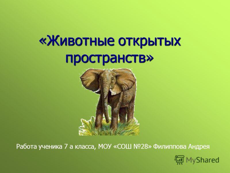 «Животные открытых пространств» Работа ученика 7 а класса, МОУ «СОШ 28» Филиппова Андрея