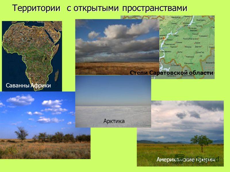 Территории с открытыми пространствами Степи Саратовской области Американские прерии Саванны Африки Арктика