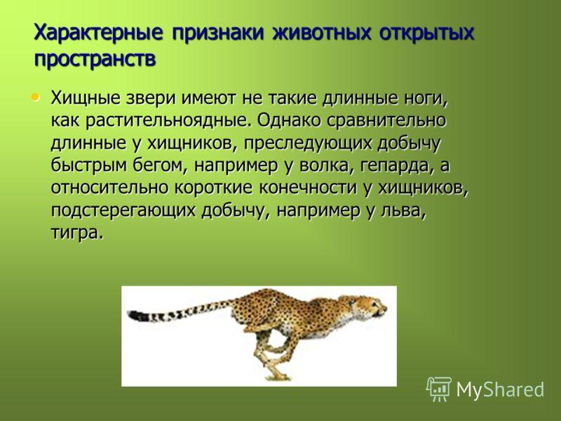 Характерные признаки животных открытых пространств Хищные звери имеют не такие длинные ноги, как растительноядные. Однако сравнительно длинные у хищников, преследующих добычу быстрым бегом, например у волка, гепарда, а относительно короткие конечност