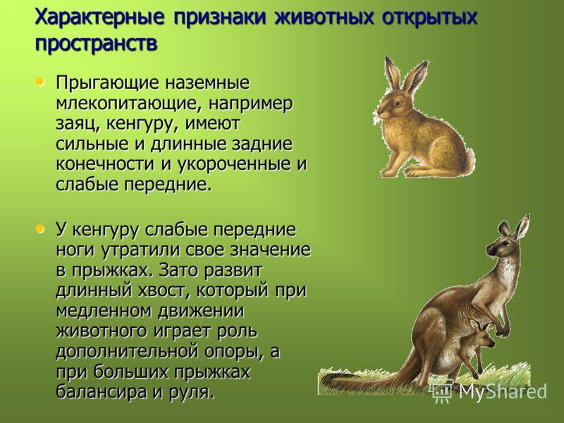 Характерные признаки животных открытых пространств Прыгающие наземные млекопитающие, например заяц, кенгуру, имеют сильные и длинные задние конечности и укороченные и слабые передние. Прыгающие наземные млекопитающие, например заяц, кенгуру, имеют си