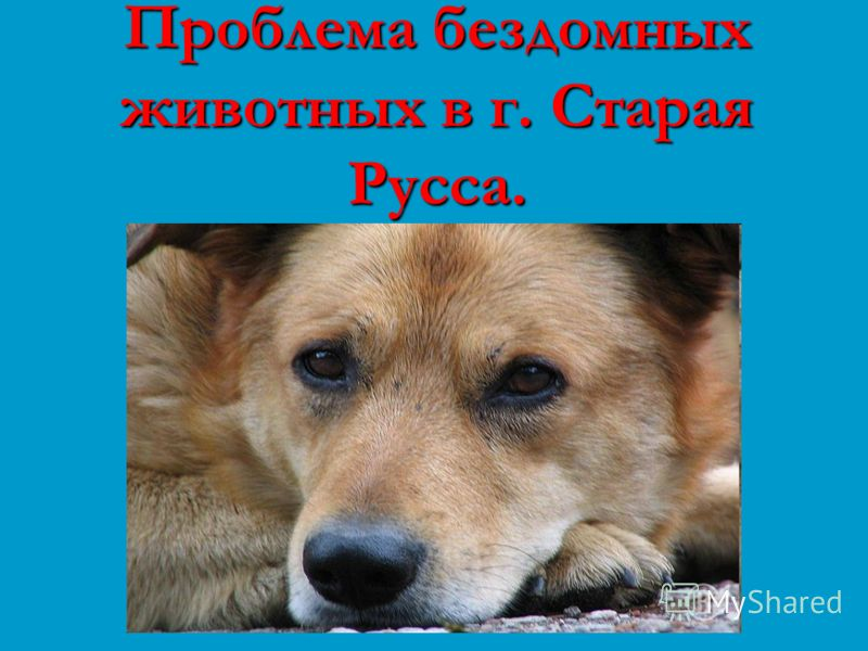 Проблема бездомных животных в г. Старая Русса.